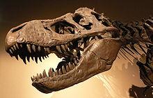 220px-Palais_de_la_Decouverte_Tyrannosaurus_rex_p1050042