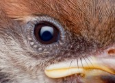 12308130-close-up-of-sparrow-face