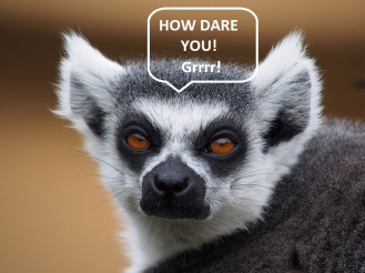 Ring-tailed_lemur_portrait_2